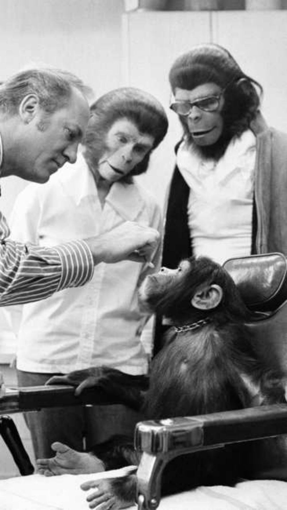 chimpanzees-kelly-prepare-for-the-shooting-of-the-film-escape-from-the-planet-of-the-apes-1971