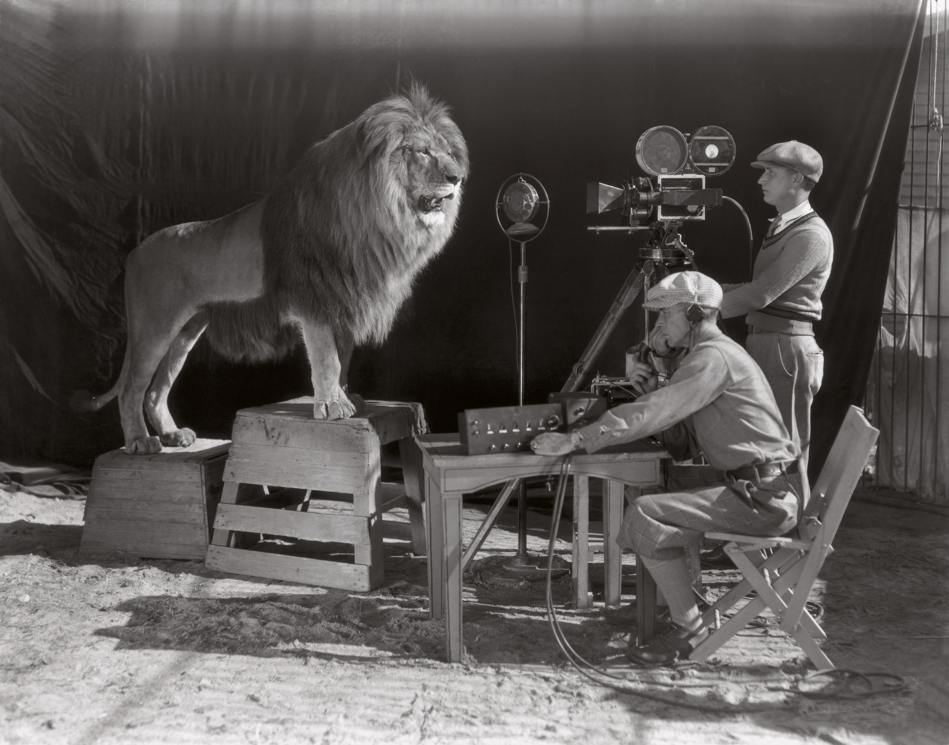 pictures-of-the-famous-screensaver-lion-jackie-company-metro-goldwyn-mayer-1928