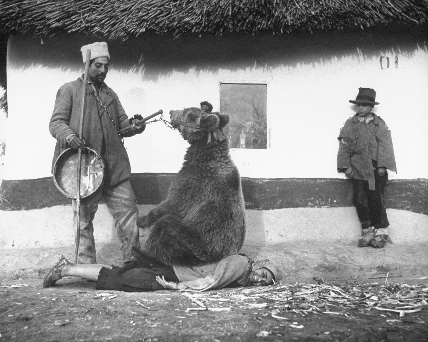 treatment-of-back-massage-by-a-bear-romania-1940