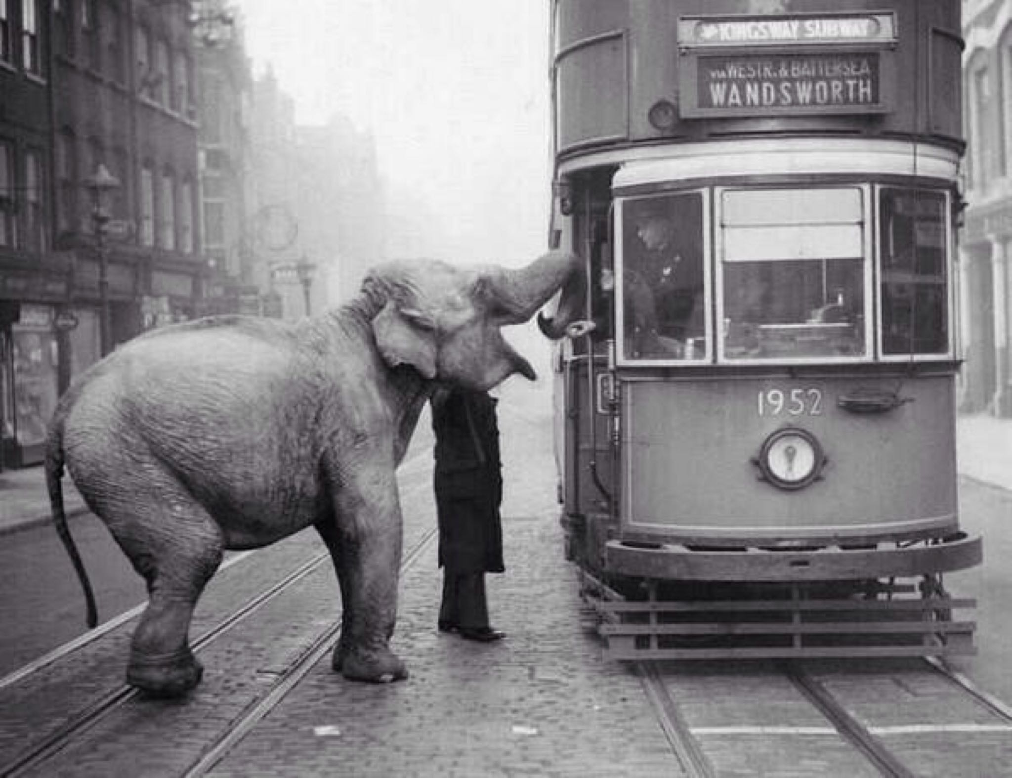 An Elephant stops a tram on Gray's Inn Road to eat an apple from the driver — London, December 1936